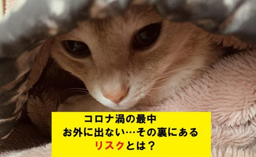 ATU 福岡 警備 毛布にくるまった猫