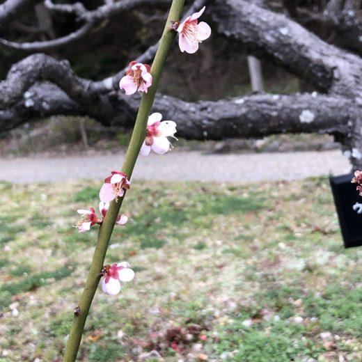 ATU 福岡 警備 動植物園 梅